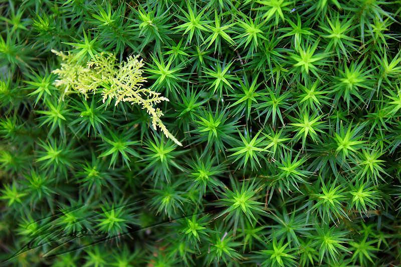 Définition jardin thérapeutique - jardin de mousses -