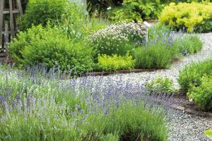 Qu'est-ce qu'un jardin thérapeutique ? - img Jardin de simples