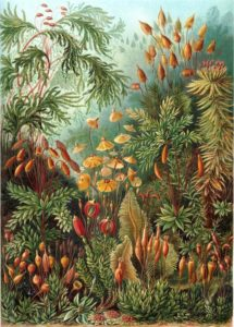 jardin-thérapeutique-alzheimer-botanique-1.jpg