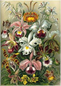 jardin-thérapeutique-unité-alzheimer-botanique-3