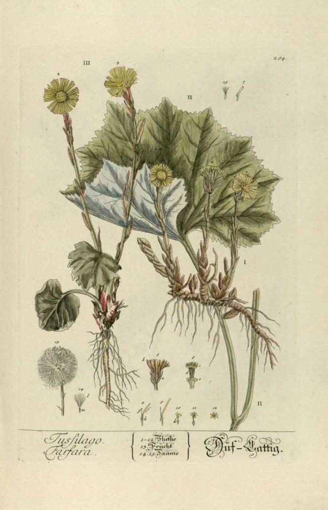 la demarche participative - création jardin de soin -tusilago-farfara