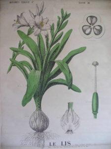 une question de taille surface jardin thérapeutique - botanique_13
