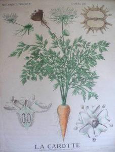 Taille jardin thérapeutique - botanique_4