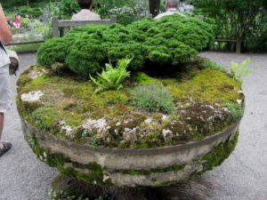 jardin_mousse-terre-jardin thérapeutique