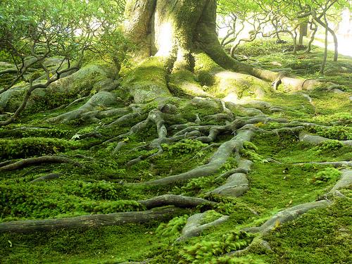 jardins naturels - ecojardinage - permaculture