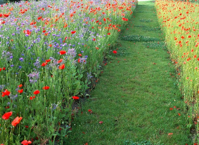 jardin pour réduire les handicaps - img