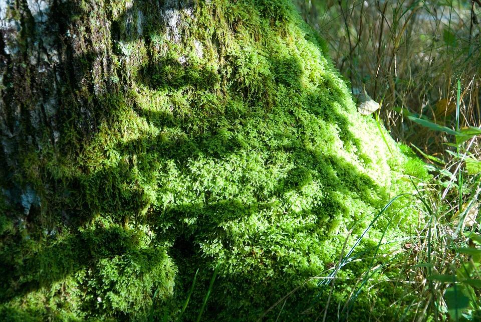 Ecopsychologie et jardinage - img