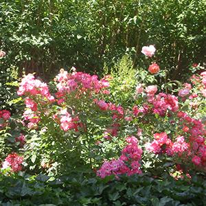 Le jardin des hêtres - img2