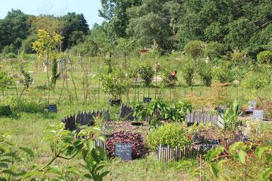 initiation à l'hortithérapie-jardins-humanite-img