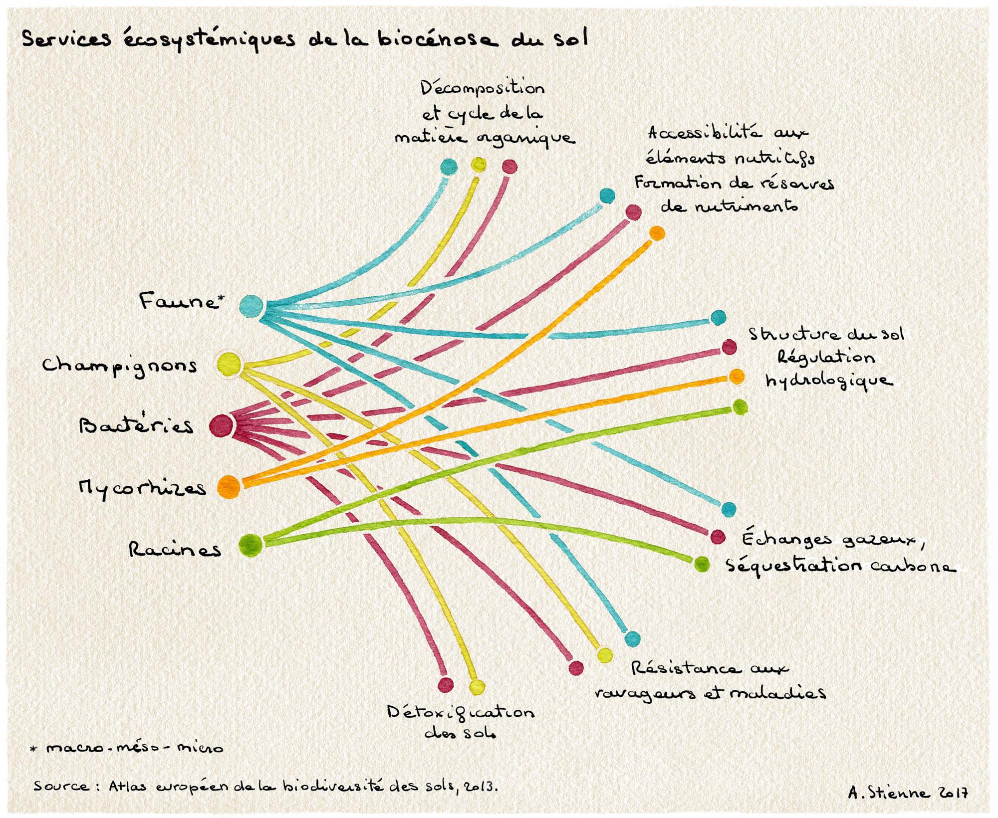 Stienne - biocenose du sol - jardin-therapeutique - img3