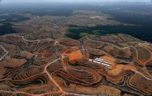 Borneo - deforestation - huile - de- palme