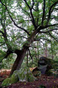 sylviculture et malforestation - drouet- 1