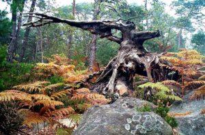 sylviculture et malforestation - drouet- 2