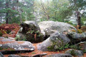 Dans la Forêt de Fontainebleau. Pour des forêts vivantes...
